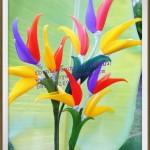 Paradicsommadár virág, avagy a papagájvirág