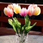 Egyszerű tulipán
