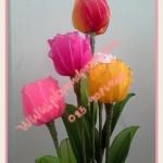 Különleges rózsa