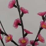 Japán szilvavirág