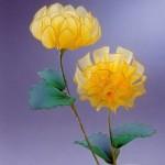 Sárga őszirózsa készítése harisnyából