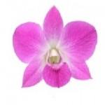 Lepkeorchidea (Dendrobium) készítése video-segédlettel (I. rész) – A virág elkészítése