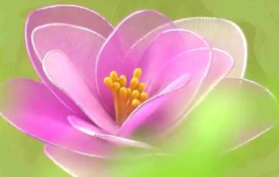 Japán rózsa harisnyából