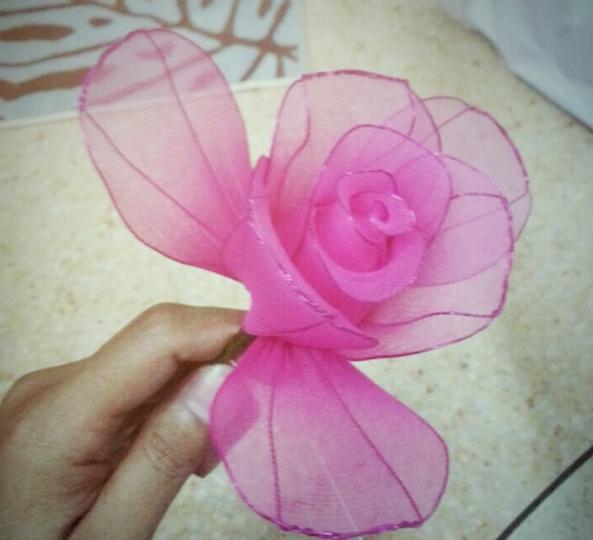 harisnyavirág rózsa 13