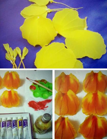 harisnyavirág cattleya orchidea 4