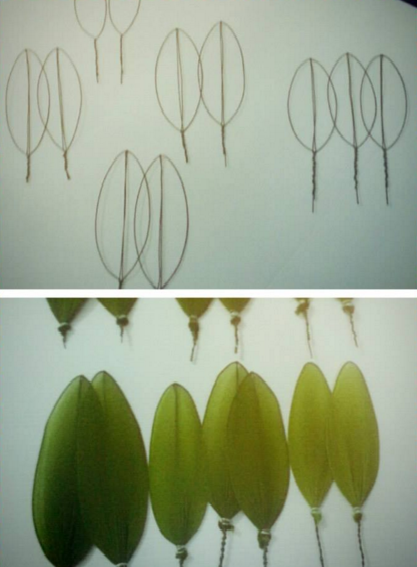 harisnyavirág cattleya orchidea 6