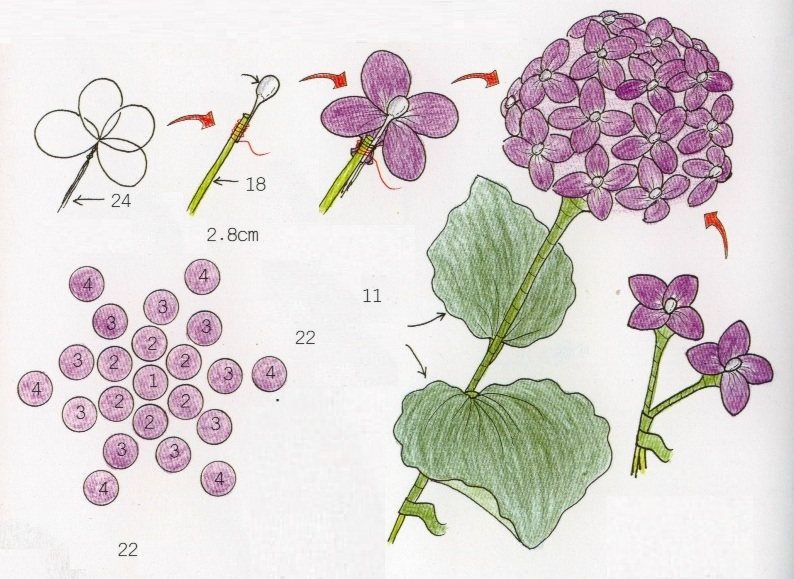 harisnyavirág hortenzia 2