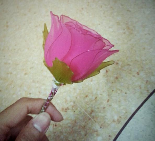 harisnyavirág rózsa 14