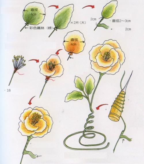 rózsa harisnyavirág 2
