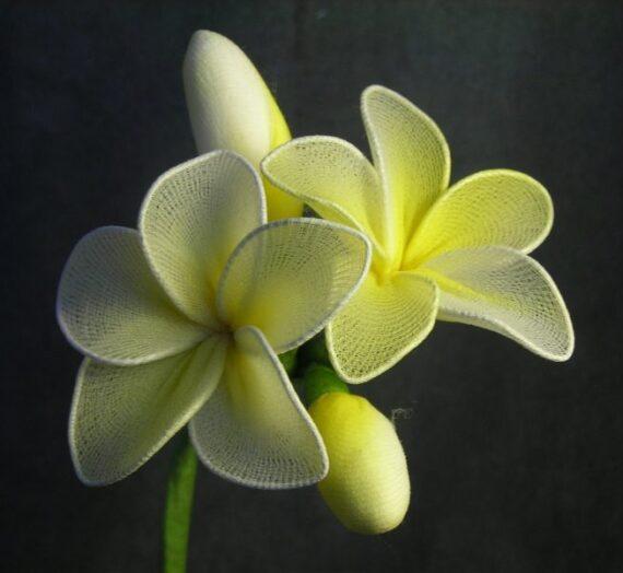 Egyszerű sárga harisnyavirág – kezdőknek