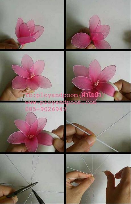 harisnyavirág rózsaszín 4