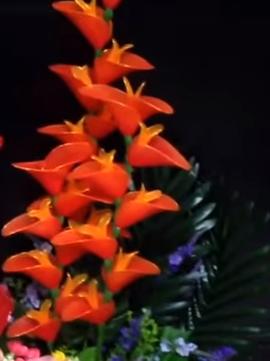 harisnyavirág papagájvirág2