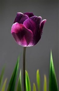 fordított technika tulipán