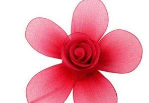 rózsa harisnyavirág