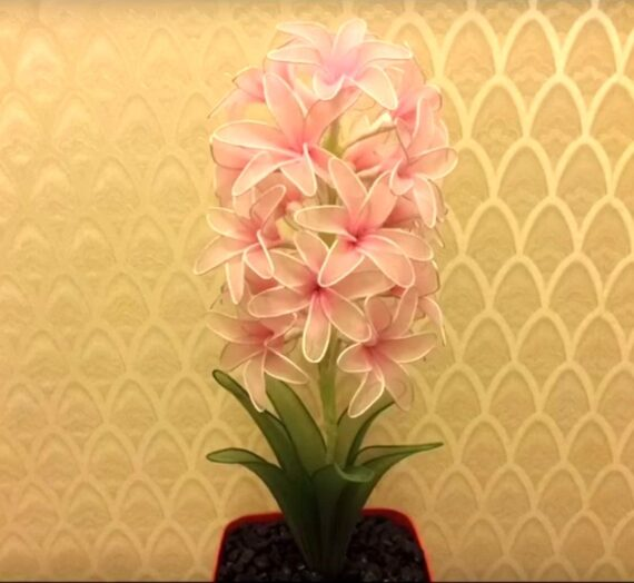 Rózsaszín jácint – igazi tavaszi virág