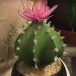 Kaktusz harisnyából, lépésről lépésre videóval