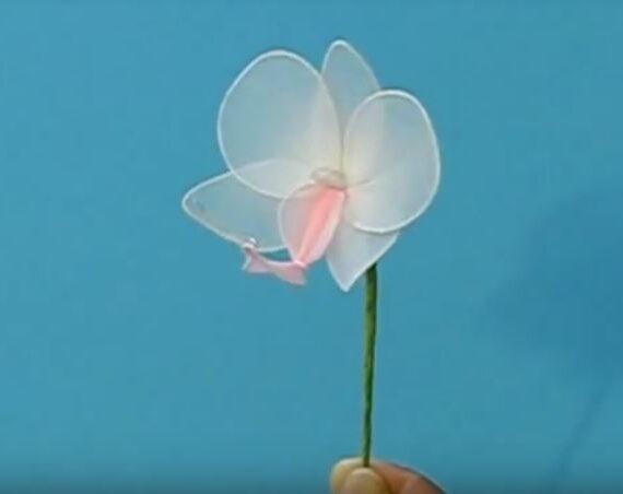 Lepkeorchidea (Phalaenopsis) készítése videóval