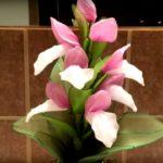 Különleges orchidea – csak haladóknak!
