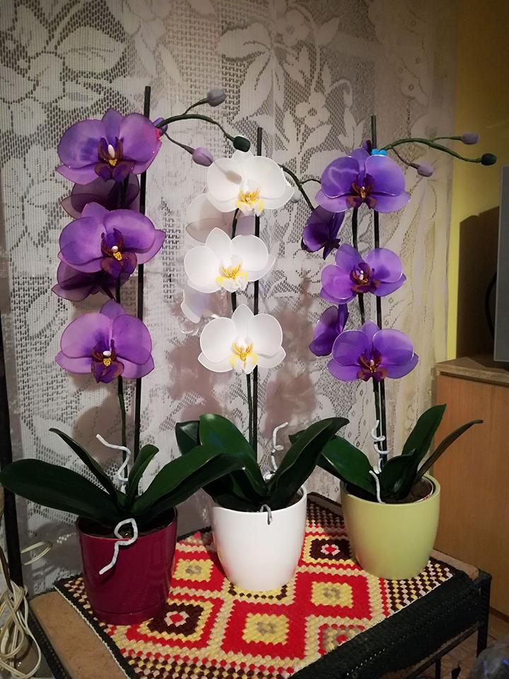 Újabb orchidea harisnyavirág  62b98559e9