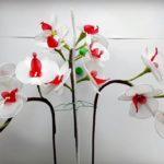 Újabb orchidea harisnyavirág
