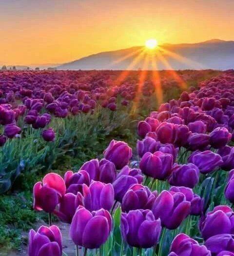 11 virágötlet lila harisnyához
