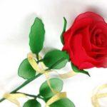 Csodaszép rózsa egyszerűen