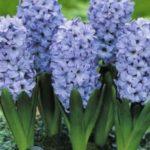 Kék harisnyából milyen virágot készíthetünk?