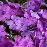 A nagy tavaszi virágkörkép