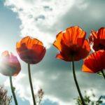 A nagy nyári virágkörkép