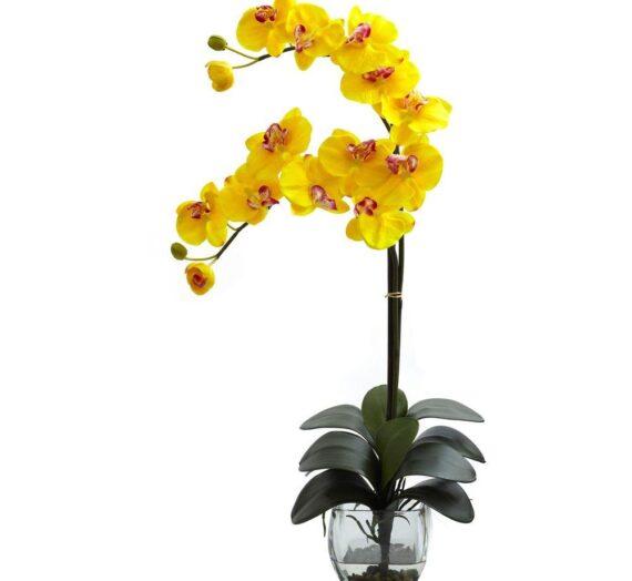 Újabb lepkeorchidea, ezúttal sárga harisnyából