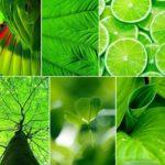 Zöld harisnya – nem csak levélhez