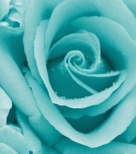 türkíz rózsa