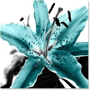 türkíz liliom