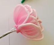 zsenília rózsa