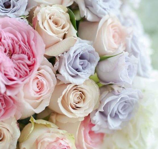 A rózsa ezer arca
