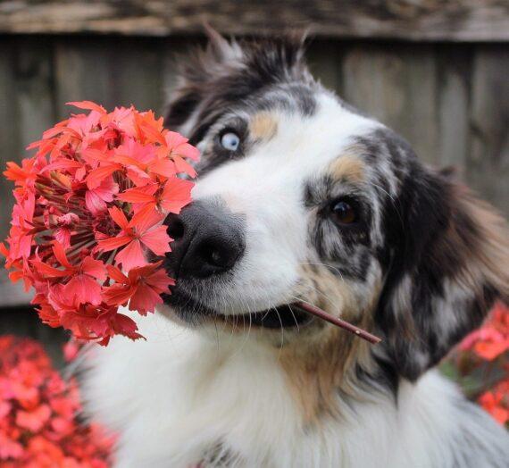 Mi a közös a kutya nevelésben és a harisnyavirág készítésben?