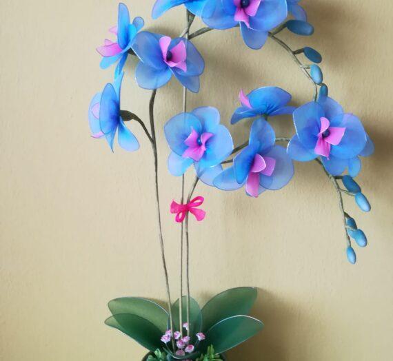 Lepke orchideák színváltozatai IV.