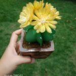 Kaktusz harisnyából, lépésről lépésre, videóval